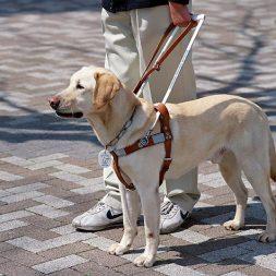 What do Service Dog Puppy-Raisers Do?