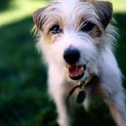 How to be the Best Dog Foster Parent