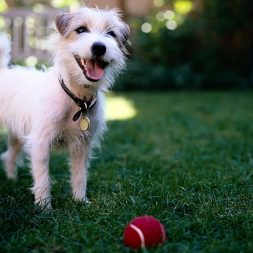 Pet Tips for Independence Day