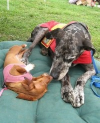 Great Dane and Dachshund cuddling on a green cushion