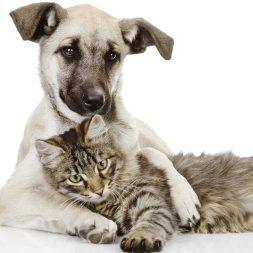 pet dog and cat cuddling