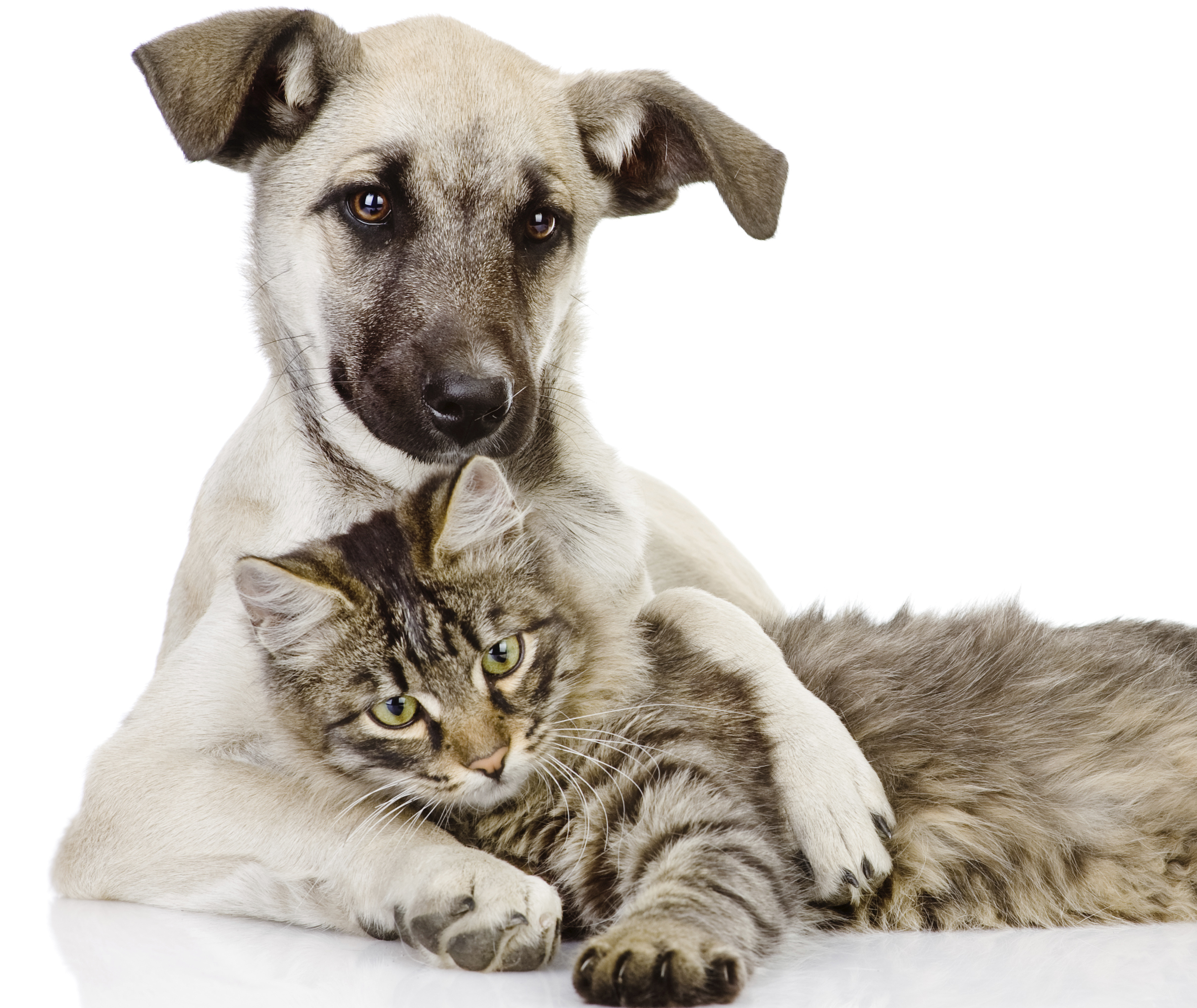 pet dog and cat cuddling