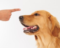 Top Ten Dog Training Tips