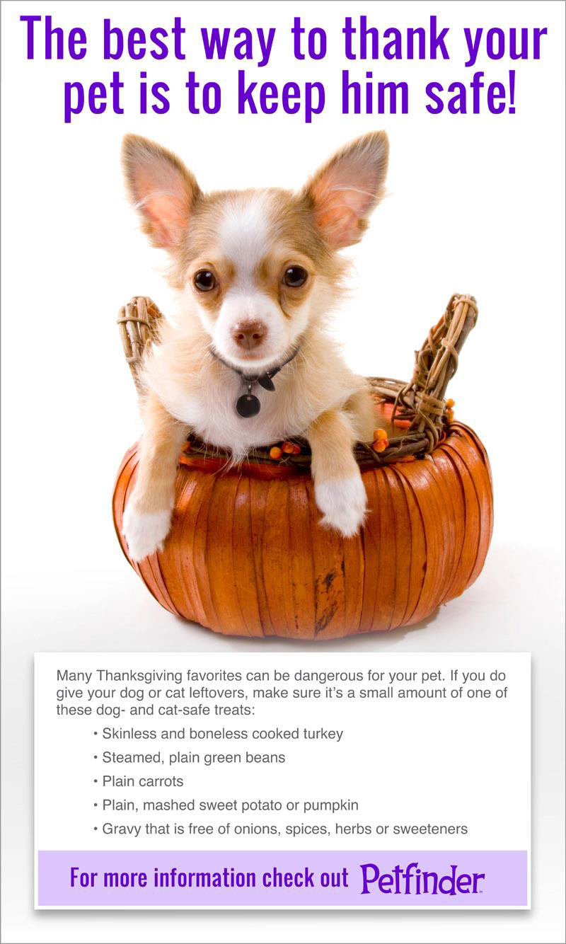 Safe Thanksgiving Treats For Your Pet
