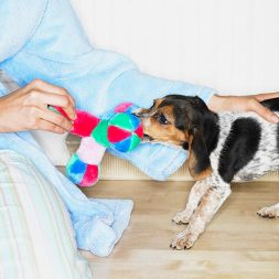 Using Thinking Games to Treat Pets with Dementia