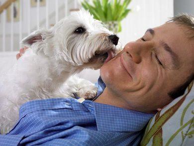 white dog licking a man