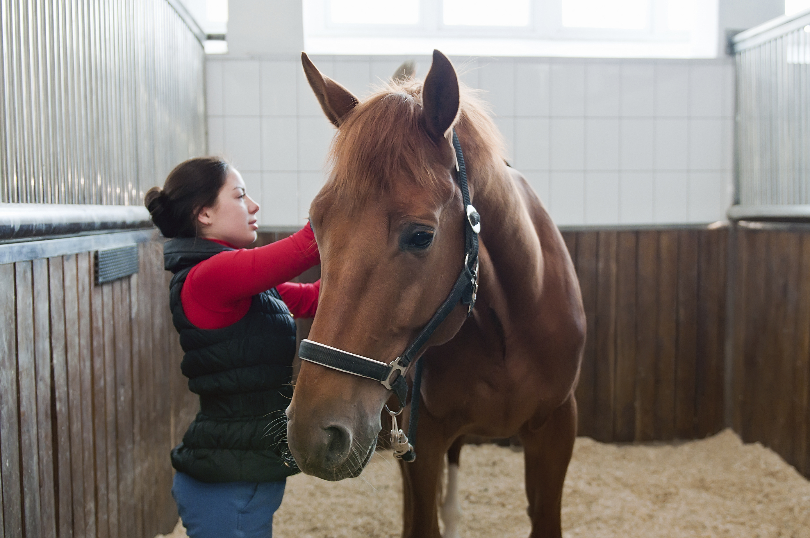 woman caring for a horse