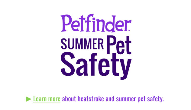 pet-summer-safety-slide1