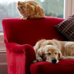 Tips for Finding Pet-Friendly Rentals
