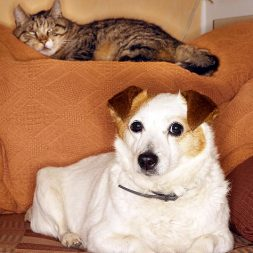 cat and dog on couch