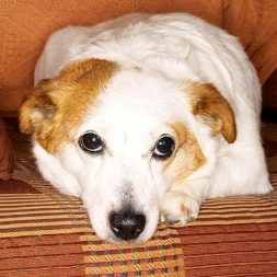 Bloat in Dogs: Signs