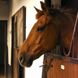 side of horse's face