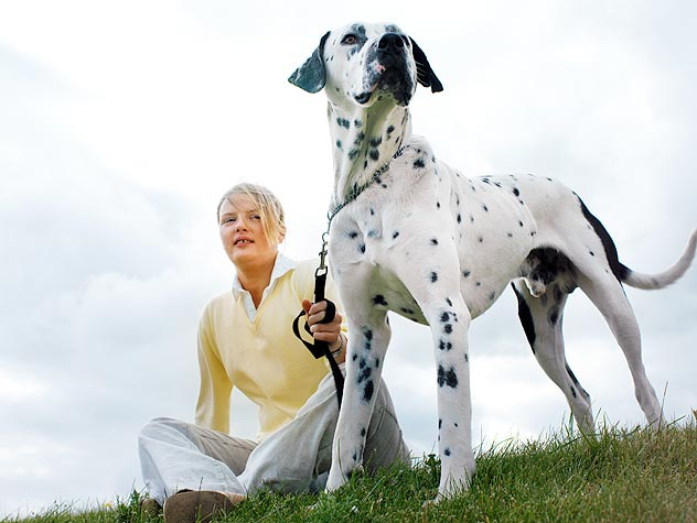 dalmation with young woman