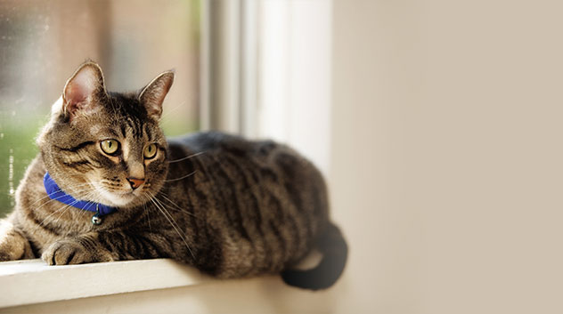 cat lying on a window sill