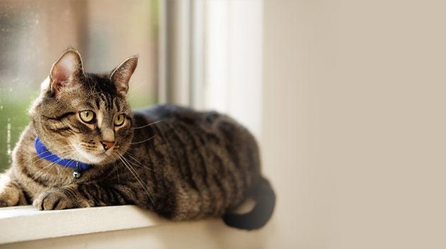 cat lying on a window sill