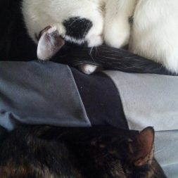 My two cats are getting along better than ever.