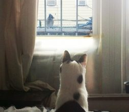 cat watching bird feeder