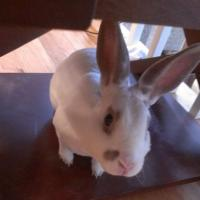 Bunbun under a table