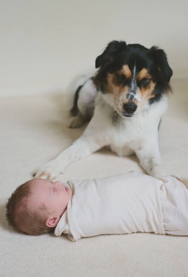 Dog watching over baby