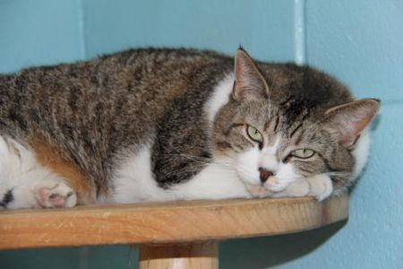 Beast, waiting for a loving responsible home at Associated Humane Societies in Forked River, NJ.