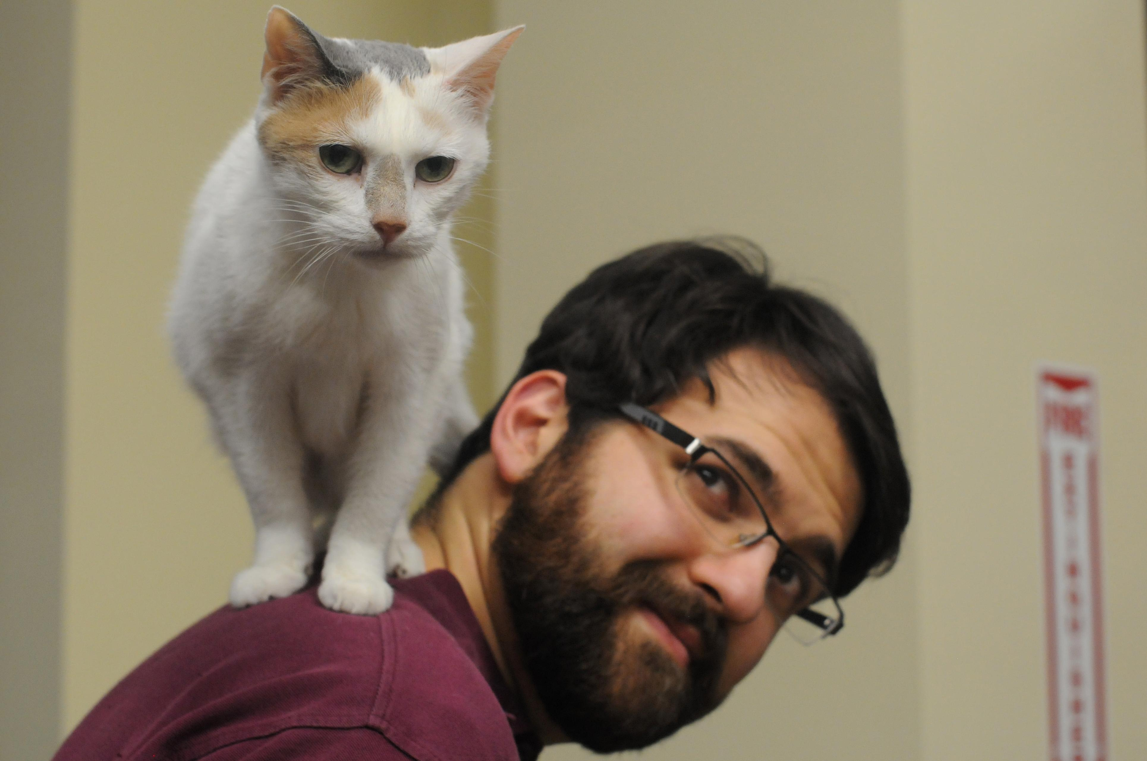 cat standing on a man's shoulder