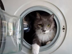 cat in washing machine