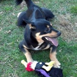 Dakota is adoptable!
