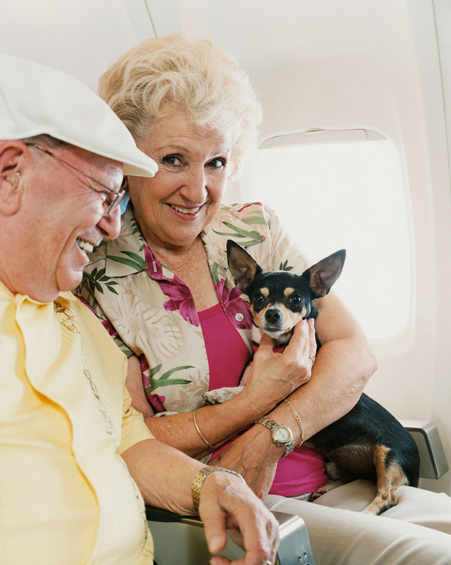 couple with small dog on a plane