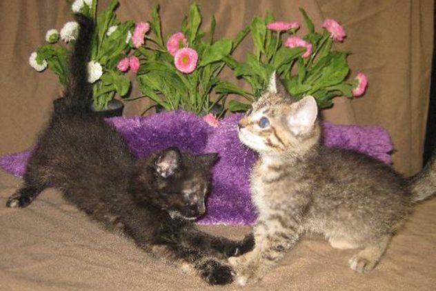 Miso and Mitzi