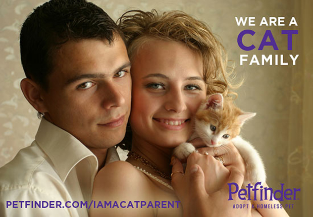We Are a Cat Family
