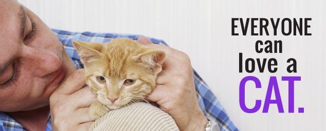 man petting orange cat