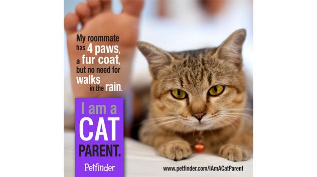 I am a cat parent