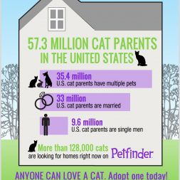 Infographic showing the types of cat parents in the United States