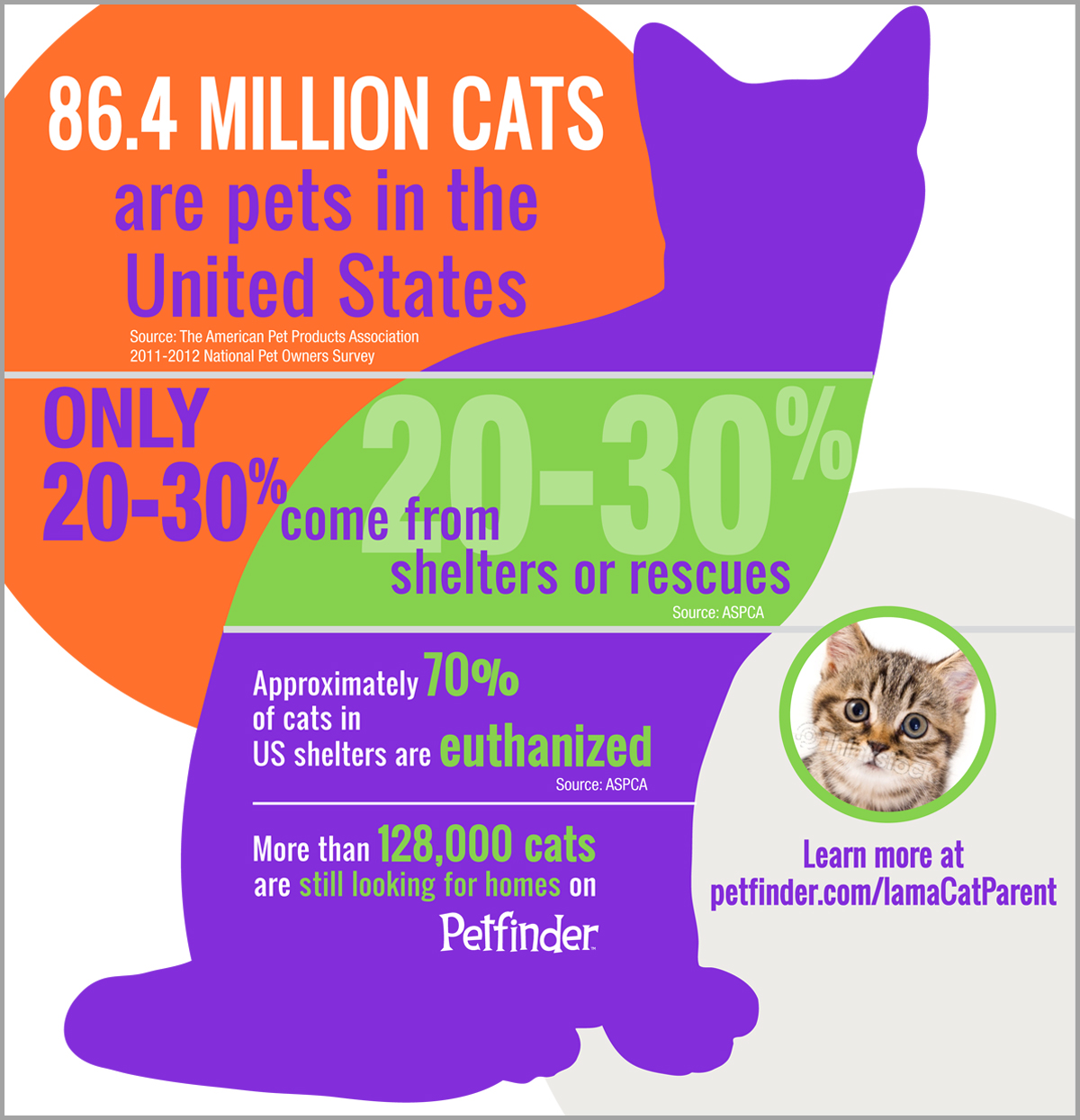 cats in the us statistics