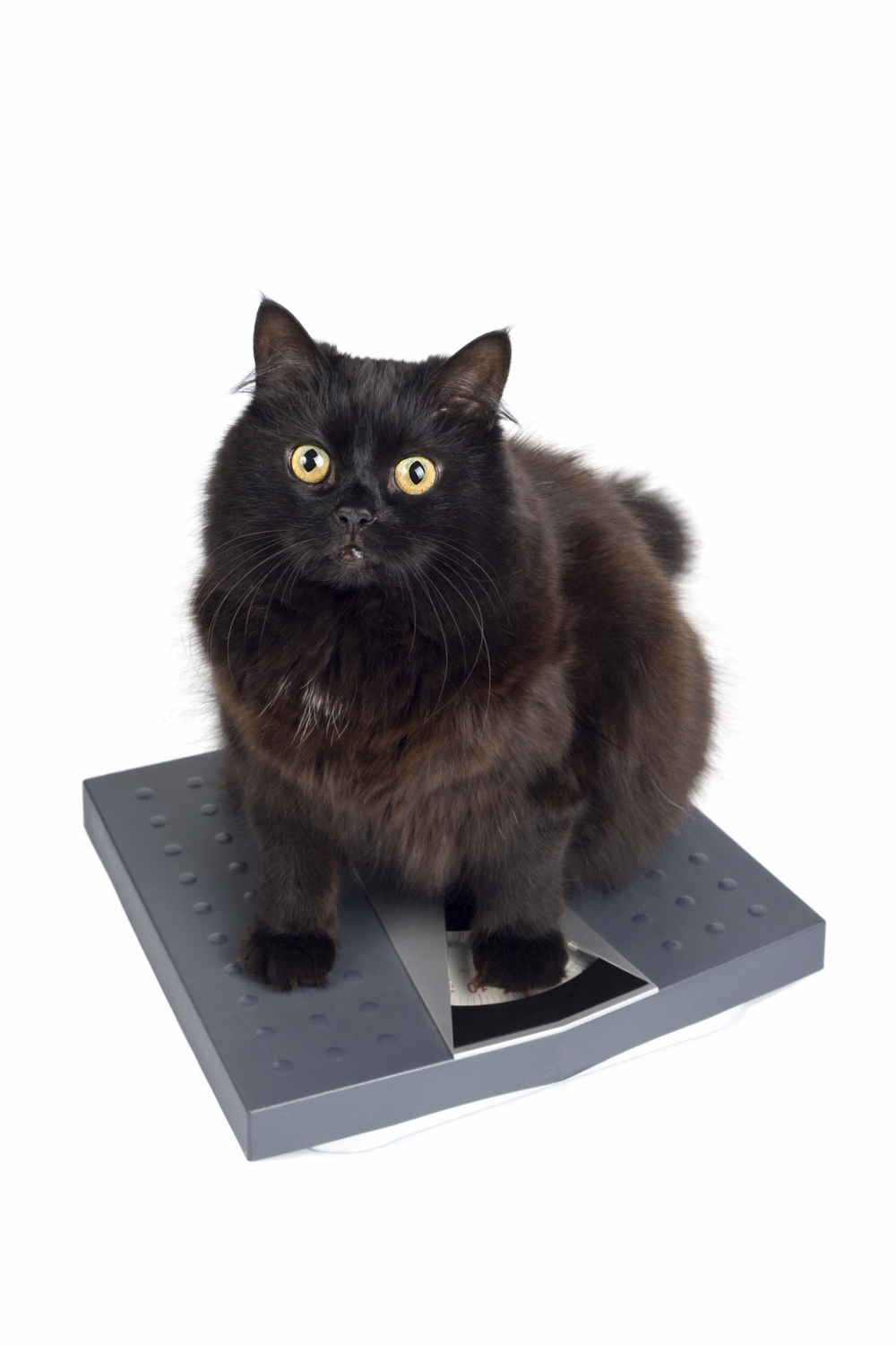Is my cat a good weight?