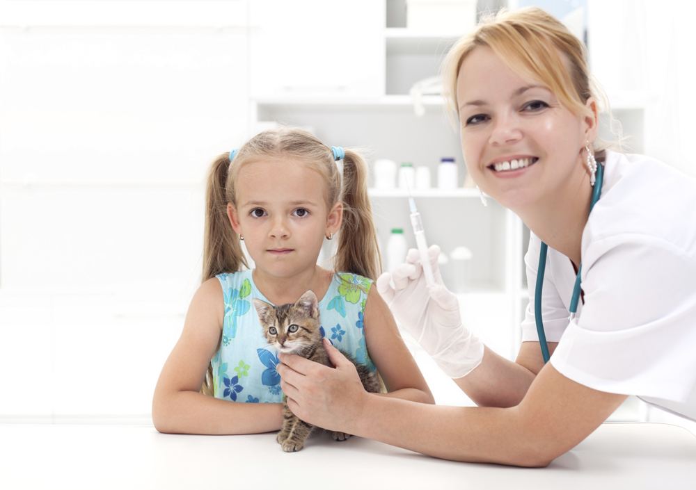 What vaccines are appropriate for my cat's lifestyle?