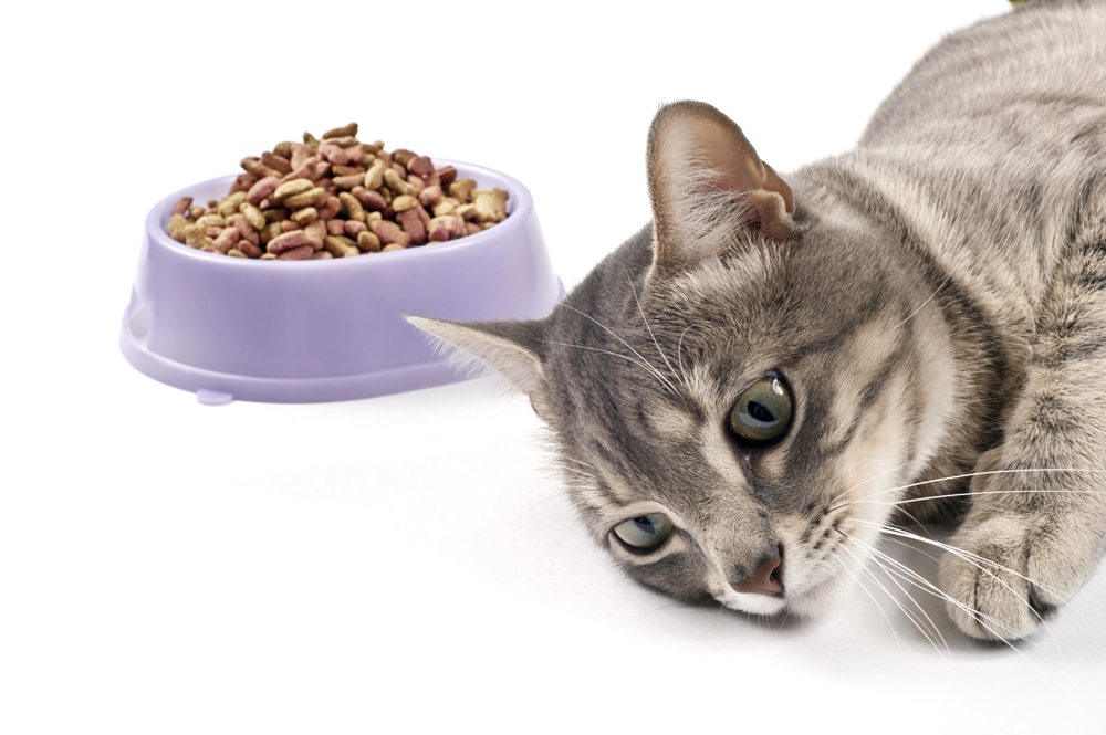 What food should I feed my cat?