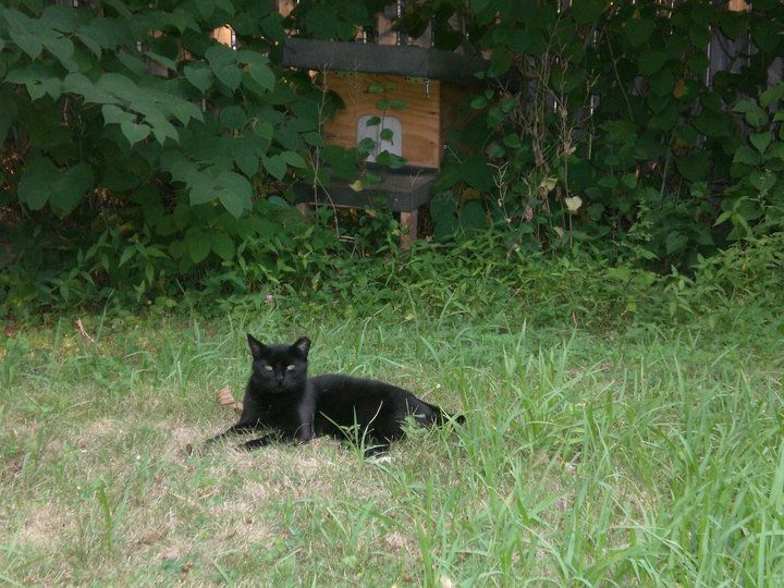 Sara's Feral Cats