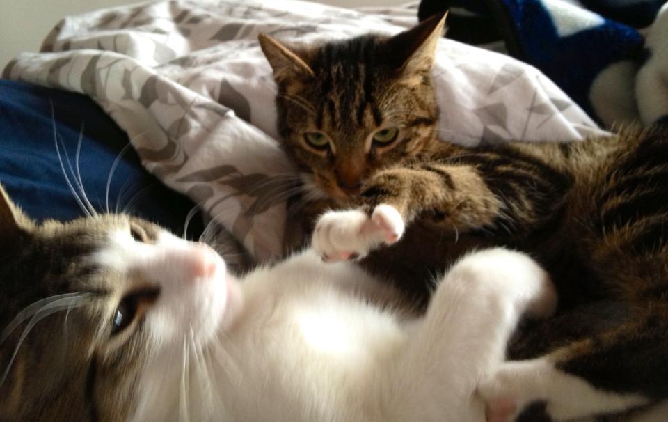 Yoshi and Harbl