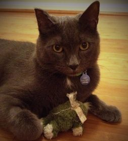 Gray short hair cat with a stuffed toy