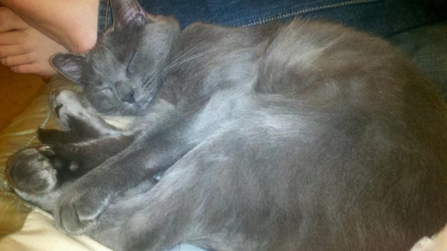 gray cat curled up