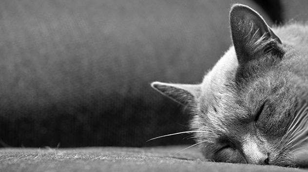 Myth: Cats are nocturnal