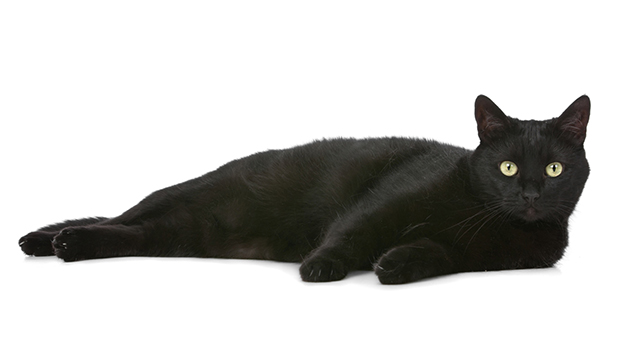 Myth: Black cats are bad luck