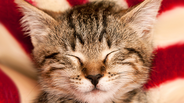 Myth: Cats purr only when happy
