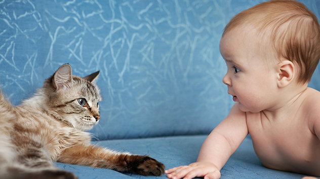 Myth: Cats steal the breath of babies