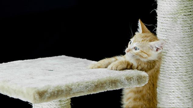 Myth: Cats always land on their feet