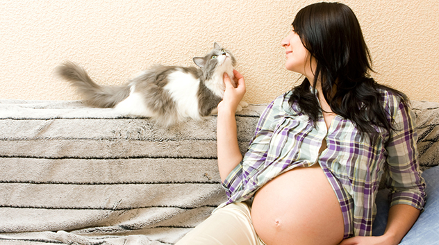 Myth: Pregnant women cannot live with cats