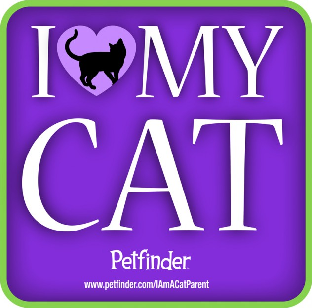 I love my cat image