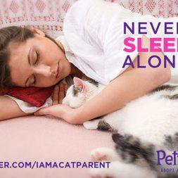 never sleep alone cat cuddle