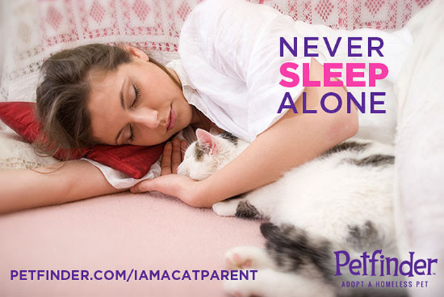 never sleep alone cat cuddle